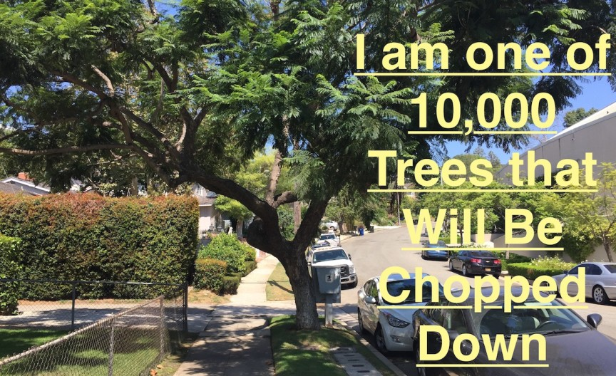 L.A.u0027s General Plan Needs a Tree Canopy Element to Save Us From Climate Change & Los Angeles must add an Urban Tree Canopy Element to